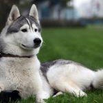 كلاب 2019 أنواع الكلاب ومميزتها صور ميكس 11
