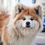 كلاب 2019 أنواع الكلاب ومميزتها صور ميكس 12