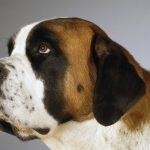 كلاب 2019 أنواع الكلاب ومميزتها صور ميكس 13