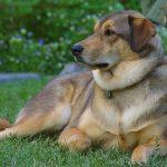 كلاب 2019 أنواع الكلاب ومميزتها صور ميكس 15