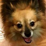 كلاب 2019 أنواع الكلاب ومميزتها صور ميكس 19