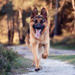 كلاب 2019 أنواع الكلاب ومميزتها صور ميكس 24