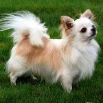 كلاب 2019 أنواع الكلاب ومميزتها صور ميكس 27