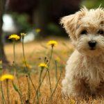 كلاب 2019 أنواع الكلاب ومميزتها صور ميكس 30