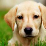 كلاب 2019 أنواع الكلاب ومميزتها صور ميكس 31