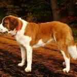 كلاب 2019 أنواع الكلاب ومميزتها صور ميكس 36