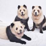 كلاب 2019 أنواع الكلاب ومميزتها صور ميكس 40