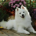 كلاب 2019 أنواع الكلاب ومميزتها صور ميكس 41