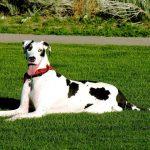 كلاب 2019 أنواع الكلاب ومميزتها صور ميكس 42