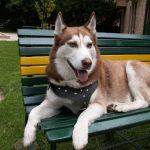 كلاب 2019 أنواع الكلاب ومميزتها صور ميكس 45