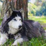كلاب 2019 أنواع الكلاب ومميزتها صور ميكس 6