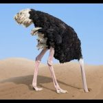 نعام معلومات كاملة عن النعام وأنوعها صور ميكس 40