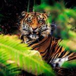 نمر 2019 معلومات النمور كاملة صور ميكس 11