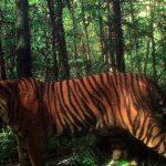 نمر 2019 معلومات النمور كاملة صور ميكس 21