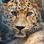 نمر 2019 معلومات النمور كاملة صور ميكس 9