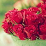 ورد أحمر وفوائد الورد الأحمر صور ميكس 16