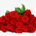 ورد أحمر وفوائد الورد الأحمر صور ميكس 17