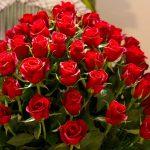 ورد أحمر وفوائد الورد الأحمر صور ميكس 18