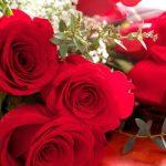 ورد أحمر وفوائد الورد الأحمر صور ميكس 22