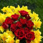 ورد أحمر وفوائد الورد الأحمر صور ميكس 25