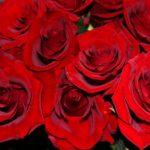 ورد أحمر وفوائد الورد الأحمر صور ميكس 4