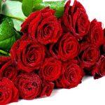 ورد أحمر وفوائد الورد الأحمر صور ميكس 47