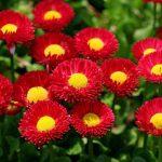 ورد أحمر وفوائد الورد الأحمر صور ميكس 48