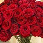 ورد أحمر وفوائد الورد الأحمر صور ميكس 50
