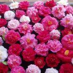 ورد أحمر وفوائد الورد الأحمر صور ميكس 54