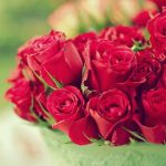 ورد أحمر وفوائد الورد الأحمر صور ميكس 6