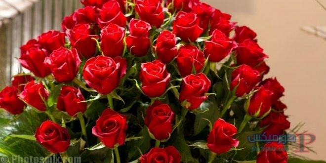 ورد أحمر وفوائد الورد الأحمر صور ميكس 8