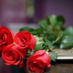 ورد أحمر وفوائد الورد الأحمر صور ميكس 9