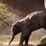 صور وخلفيات الفيل ومعلومات كاملة عن الفيل 16