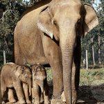 صور وخلفيات الفيل ومعلومات كاملة عن الفيل 2