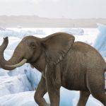 صور وخلفيات الفيل ومعلومات كاملة عن الفيل 24