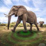 صور وخلفيات الفيل ومعلومات كاملة عن الفيل 26
