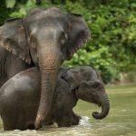 صور وخلفيات الفيل ومعلومات كاملة عن الفيل 8
