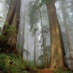 خلفيات طبيعية روعة خلفيات طبيعية ساحرة خلفيات طبيعة تحميل خلفيات طبيعية للموبايل صورمن الطبيعة 1