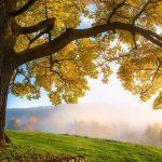 خلفيات طبيعية روعة خلفيات طبيعية ساحرة خلفيات طبيعة تحميل خلفيات طبيعية للموبايل صورمن الطبيعة 19