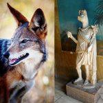 صور ذئب خلفيات و معلومات كاملة عن الذئاب 20