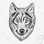 صور ذئب خلفيات و معلومات كاملة عن الذئاب 28