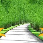 خلفيات طبيعية جميلة خليفات مياه وشلالات خلفيات خضراء 2
