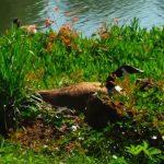 خلفيات طبيعية جميلة خليفات مياه وشلالات خلفيات خضراء 4