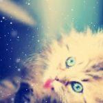 صور قطط جميلة جدا قطط كيوت للفيسبوك 10