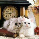 صور قطط جميلة جدا قطط كيوت للفيسبوك 13
