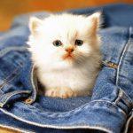 صور قطط جميلة جدا قطط كيوت للفيسبوك 14