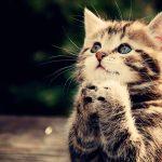 صور قطط جميلة جدا قطط كيوت للفيسبوك 15
