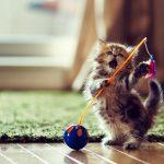 صور قطط جميلة جدا قطط كيوت للفيسبوك 16