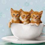صور قطط جميلة جدا قطط كيوت للفيسبوك 17