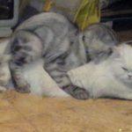 صور قطط جميلة جدا قطط كيوت للفيسبوك 18